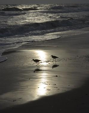B/W sunset image of sea shore