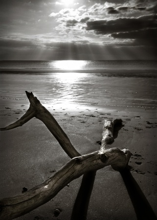 B/W image of driftwood on beach at sunset